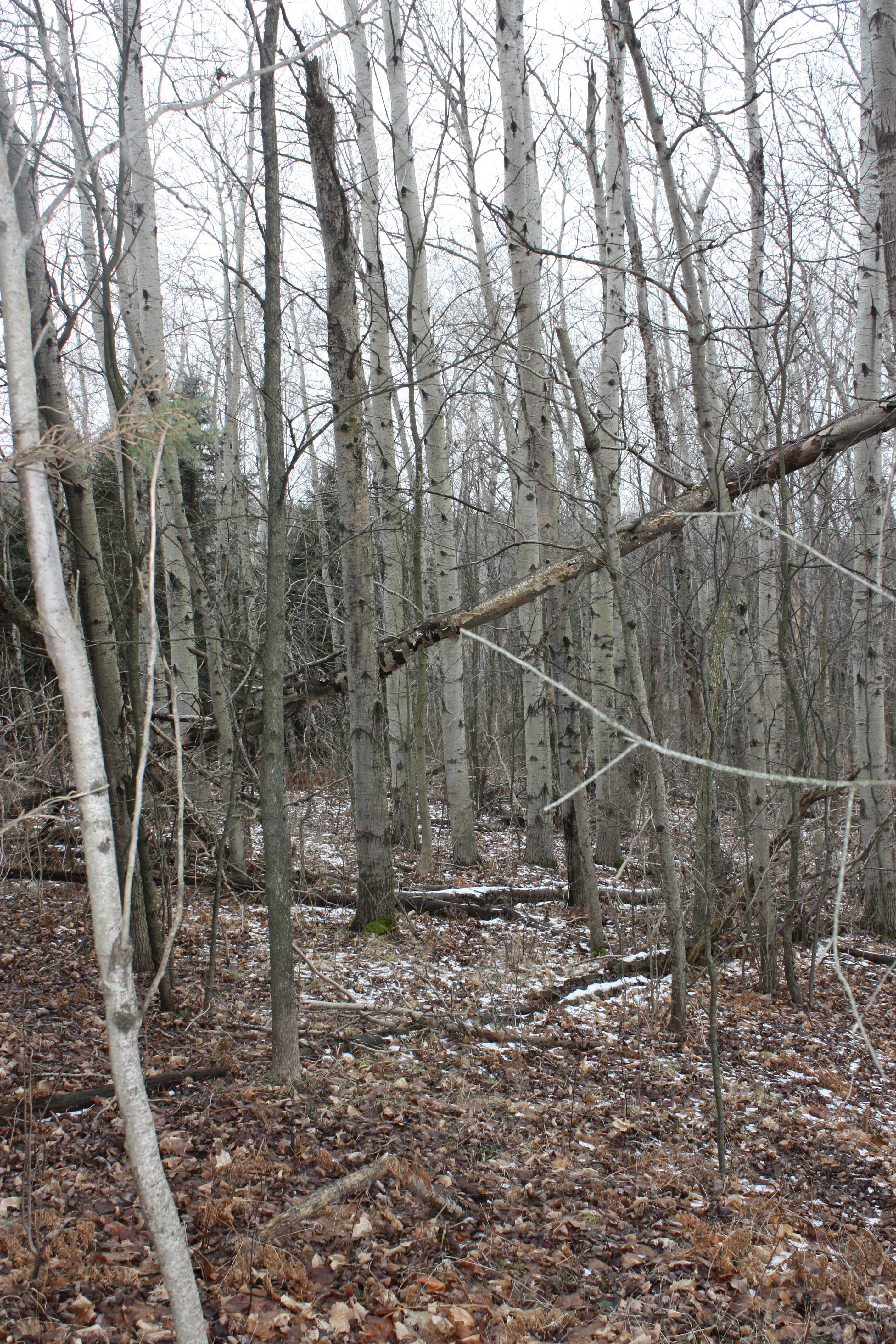 Michigan Deer Hunting Land  Hunting Property in Hesperia